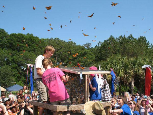 Butterfly Festival @ Tree Hill
