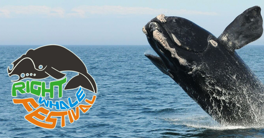 Right Whale Festival