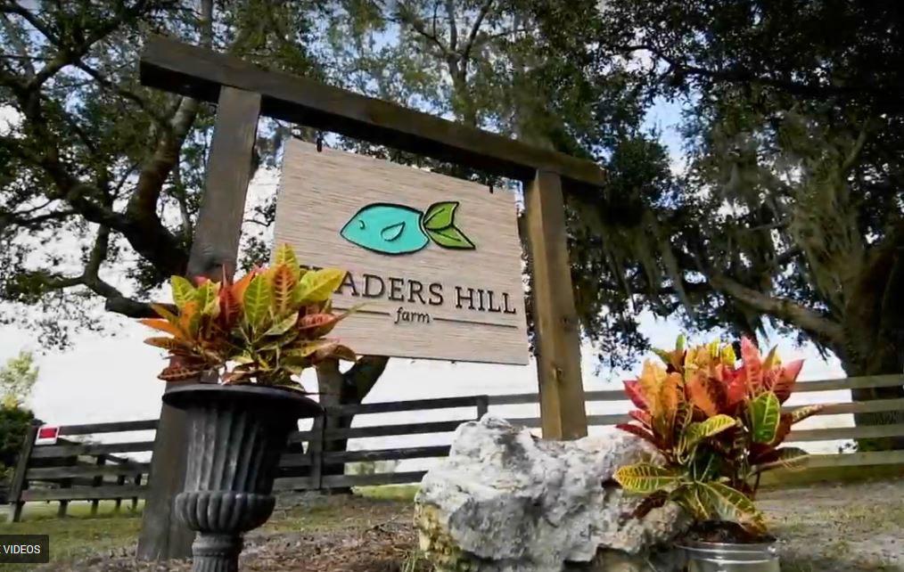 Traders Hill Farm