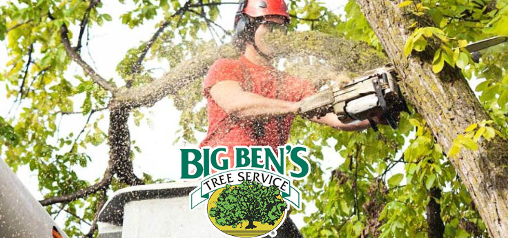 Big Ben's Tree Service