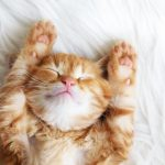 Happy Cat Sleeping on its Back with eyes closed and paws up